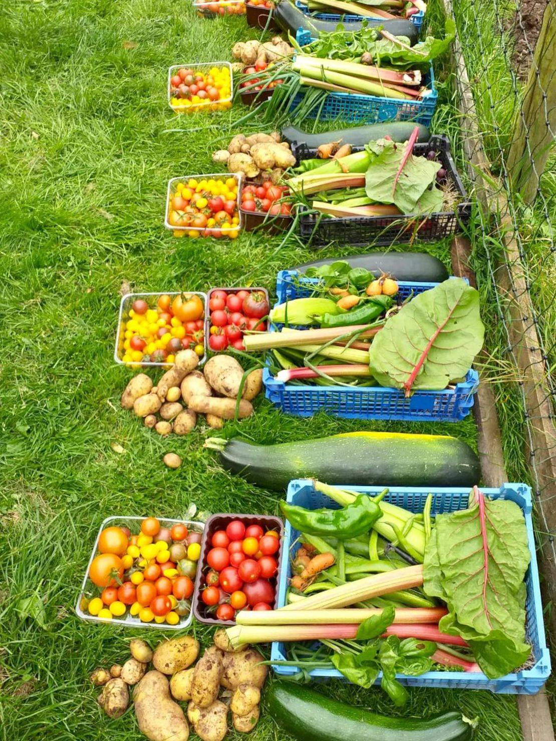 Wonderful veg shares awaiting collection.